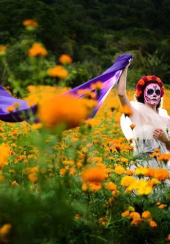 Día de Muertos - La flor de cempasúchil
